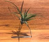 Tilla Critters Tineya One of a Kind Airplant Creations by Chili Fiesta Handiworks
