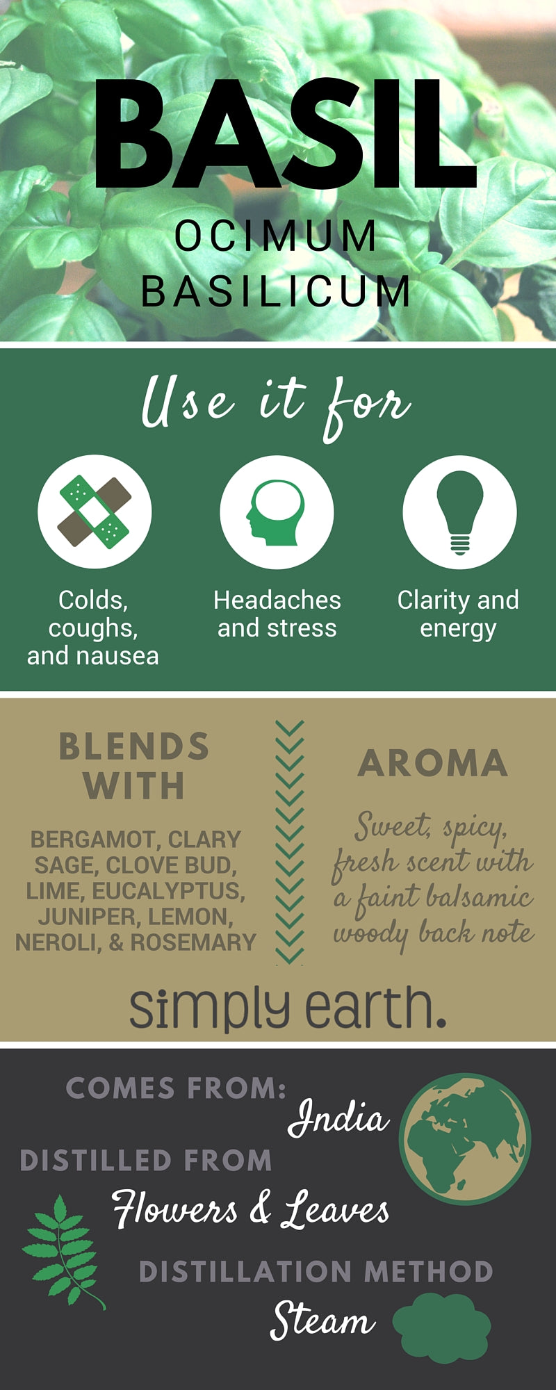 sweet basil essential oil facts