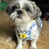 Daisy Blue Harness