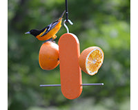Double Orange Bird Feeder