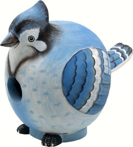 Blue Jay Gord O Bird House