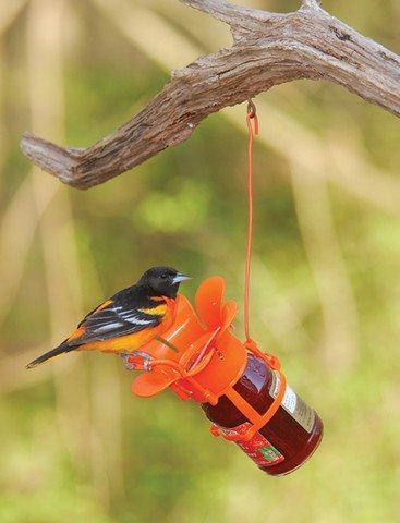 Jam, Jelly Bird Feeder