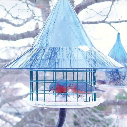 Sky Cafe Bluebird Feeder