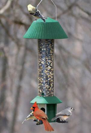 Squirrel Defeater Bird Feeder