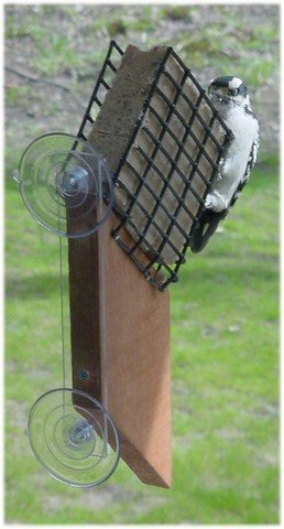 Suet Window Bird Feeder