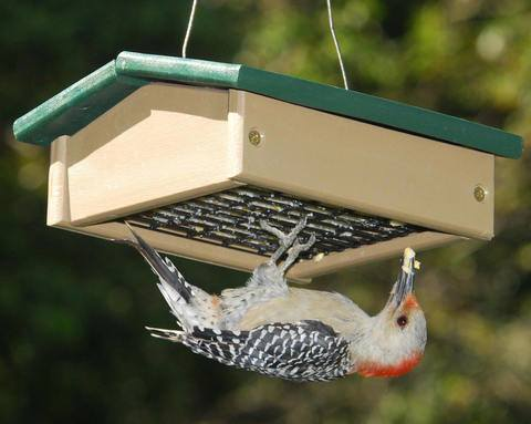 Upside Down Suet Bird Feeder