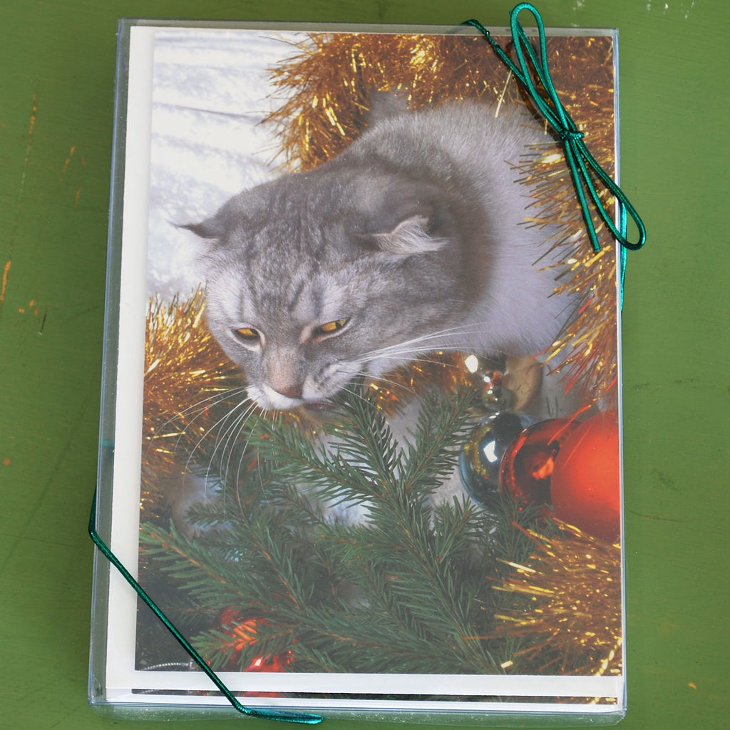 Boxed Cat Christmas Cards.Cat Eating Tree Boxed Christmas