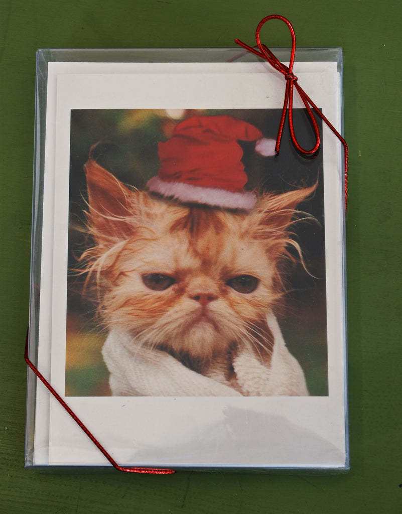 Boxed Cat Christmas Cards.Wet Cat Boxed Christmas Cards