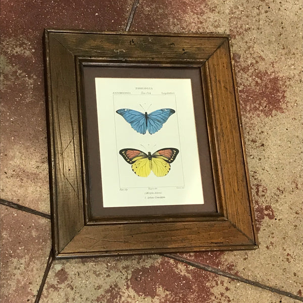 Vintage Framed Butterfly Print ONE LEFT!
