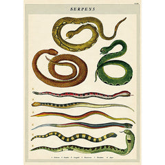 Wrapping Paper Sheet - Serpents - OUT OF STOCK
