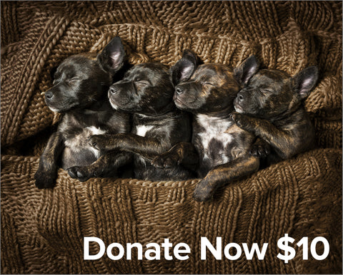QSAR $10 Donate Now