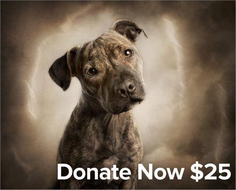 QSAR $25 Donate Now