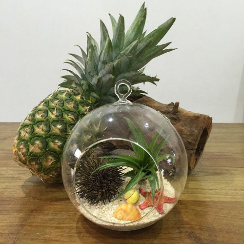 Sea Fiesta Terrarium Kit