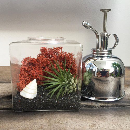 Singapore Air Plant Terrarium Design with Ionantha and Reindeer Preserved Moss