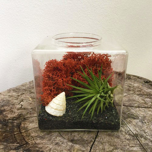 The Punaluu Air Plant Terrarium Kit