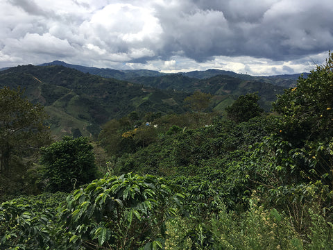 Common Man Coffee Roasters Colombia Landscape