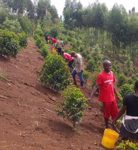common man coffee roasters long miles coffee project trees for kibira