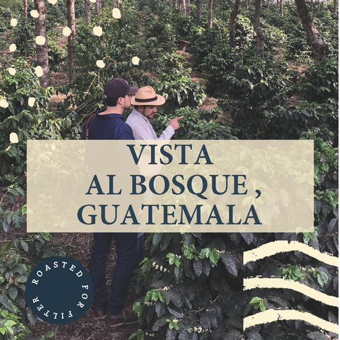Vista al Bosque, Guatemala - Filter Roast