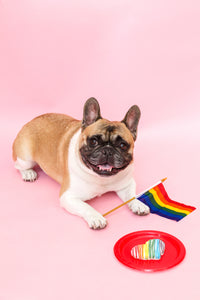 Best gifts for dog lovers french bulldog