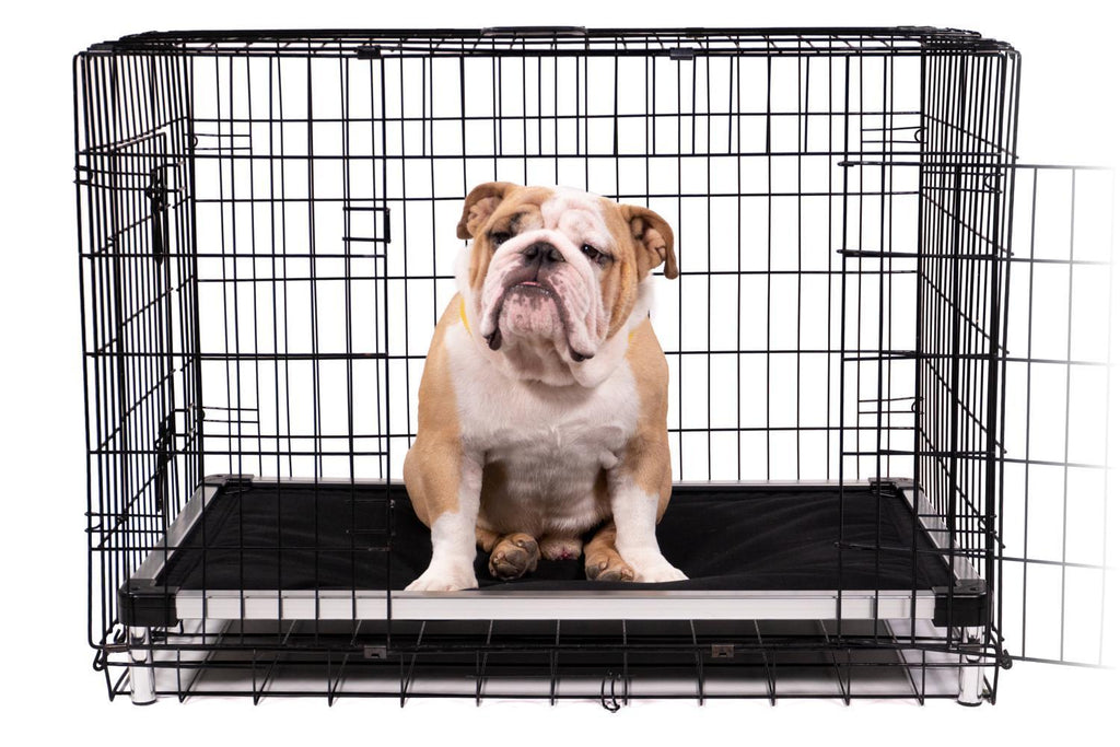Chew Proof Armored Elevated Padded Dog Crate Bed