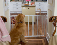 Auto Lock Pet Gate