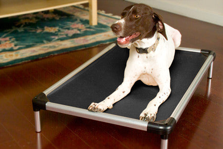 black chewproof dog beds