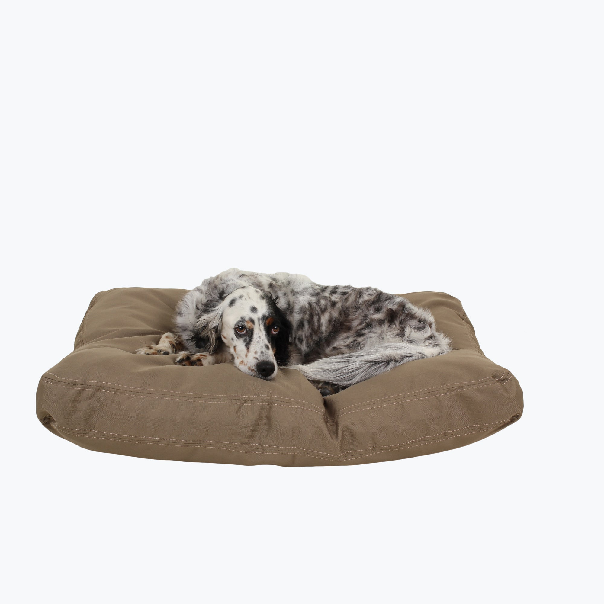 chew-proof rectangle dog bed