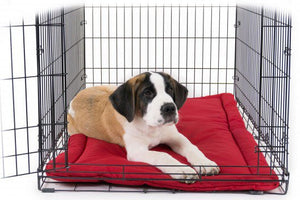 chew-proof dog crate bed