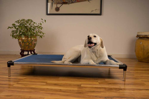 Metal chew-proof dog bed frame