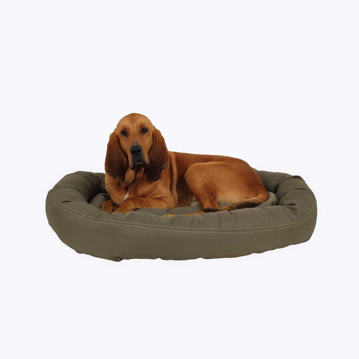 chew-proof donut dog bed