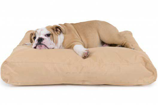 chew-resistant dog bed