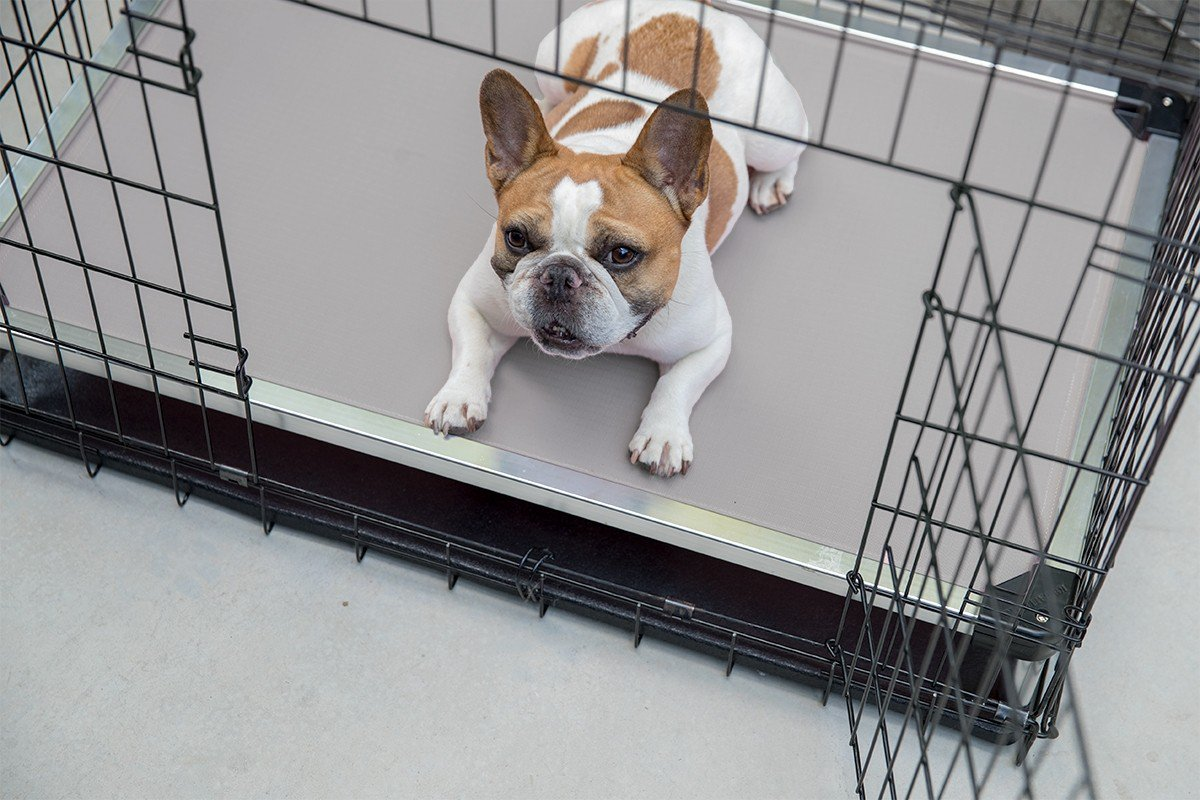 chew proof dog bed crate