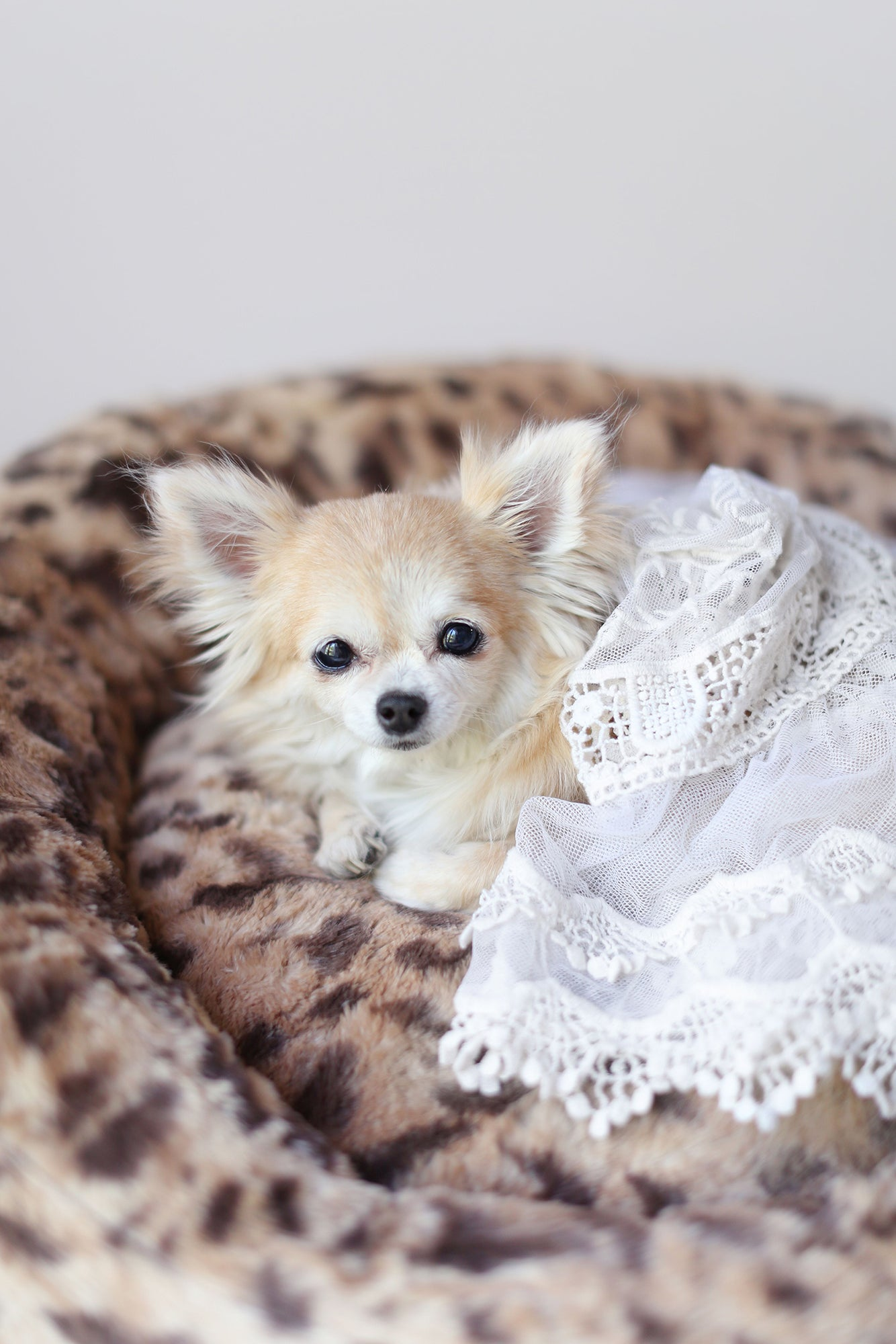 king leopard luxury dog bed chihuahua