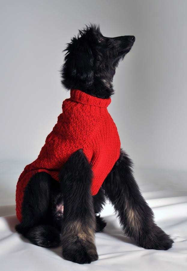 red cable knit dog sweater wool