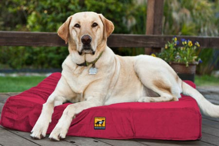 chew-resistant memory foam dog bed