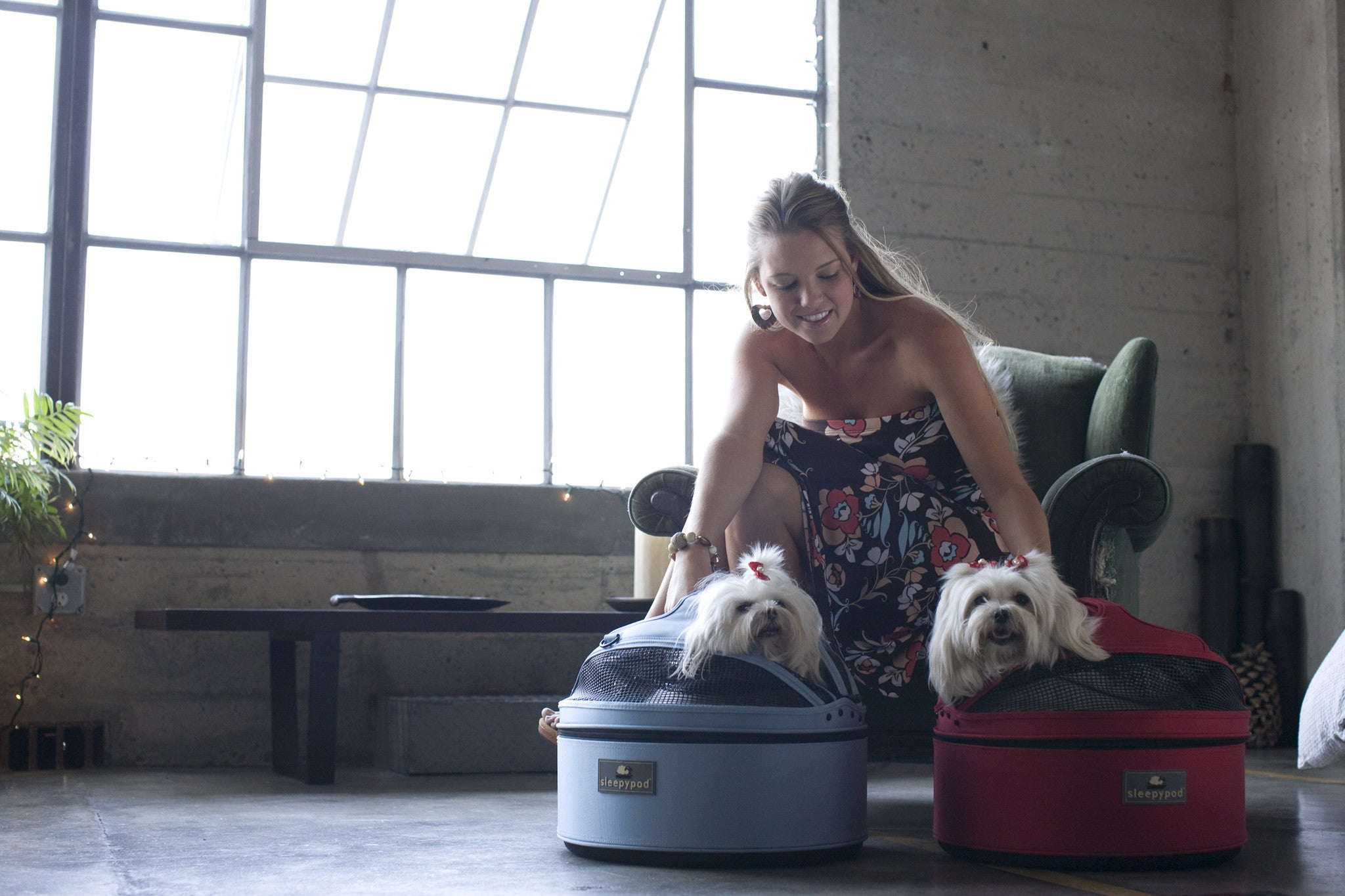 Sleepypod mobile dog beds