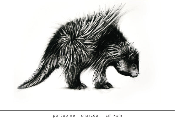 Tori Stowe Artist Porcupine Charcoal
