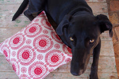 Stowe & so Scatter Cushion. Protea Pattern.