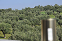 First Extrissimo Olive Oil in Greece , New Crop October 2015, Sparta