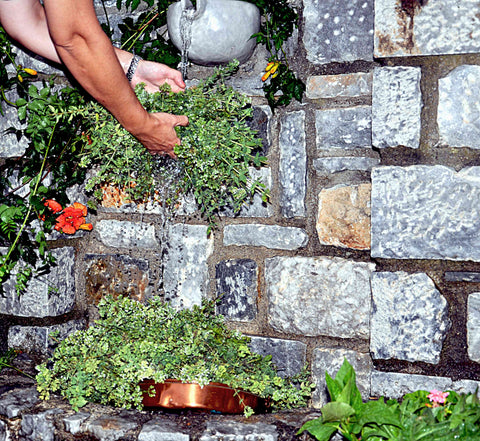 Washing the wild oregano in our mountain spring back at the village home