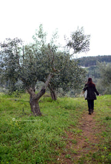 our family olive groves the spartan table