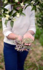 Wild Thyme from Mountain Taygetus, Wild Dried Herbs from Spartan Land,