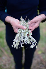 Wild sage dried from mountain Taygetus, Wild Dried Herbs from Spartan Land