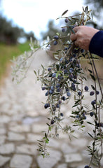 olives from our groves, the spartan table, Organic Kalamata Olives and EVOO