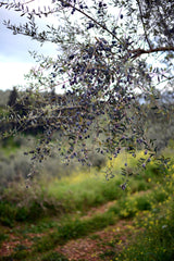 family olive groves thespartantable