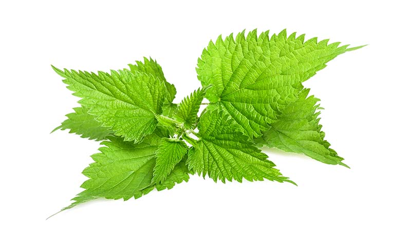 Ingredients_Nettle.jpg