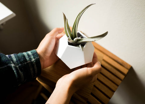 airplant lyfe levitatingplanter airplant care
