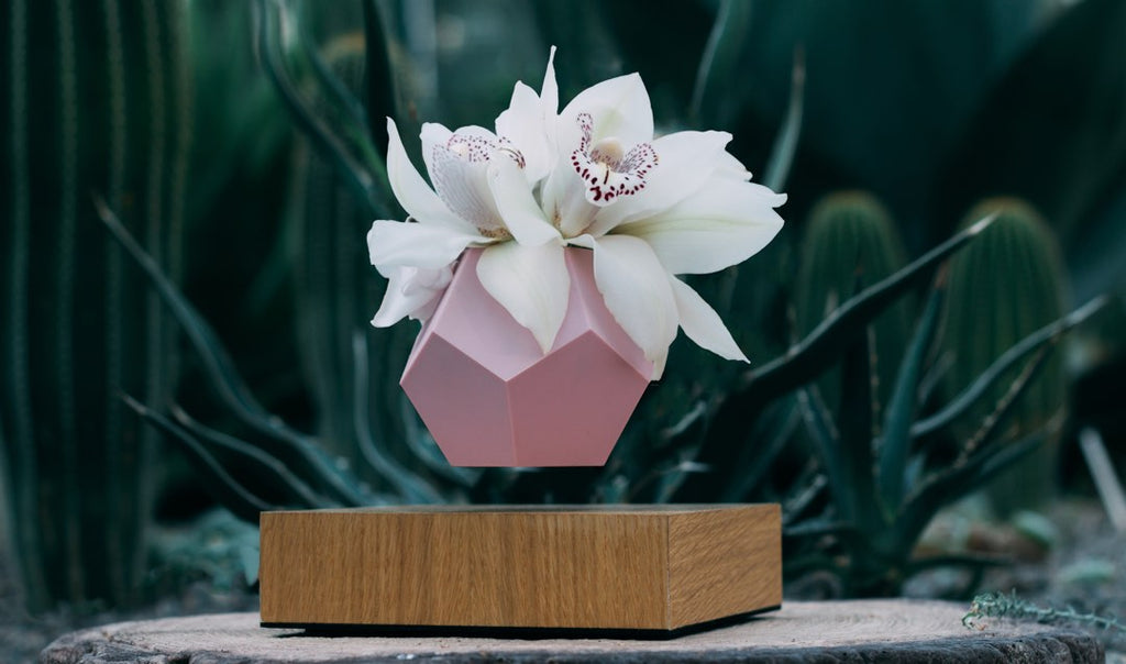 Levitating planter, pot with white flower arrangement and pink skin