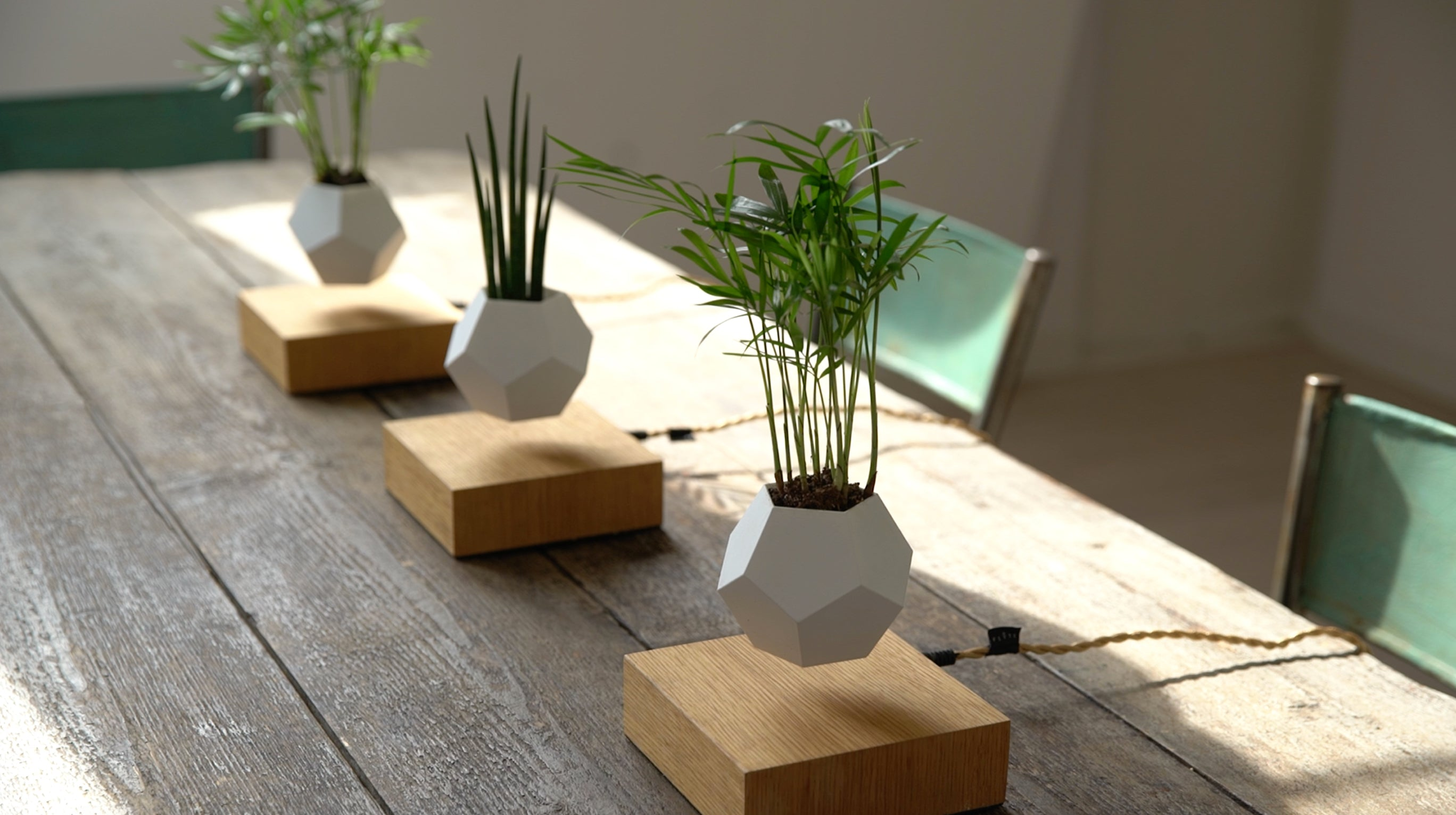 Lifestyle photo with 3 LYFE levitating planters in a row on dining table