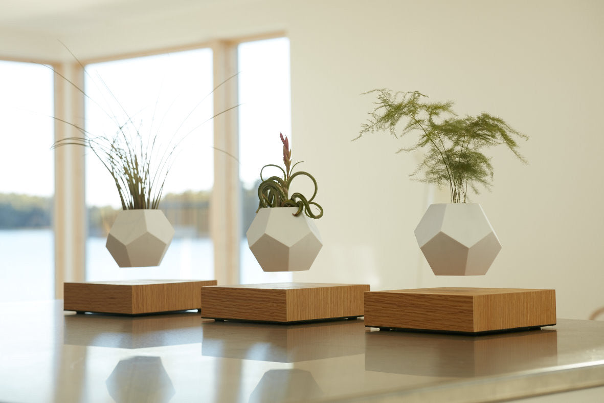 Lifestyle photo with 3 LYFE levitating planters in a row, apartment environment